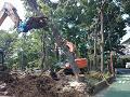 樹木伐採工事のご紹介です