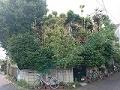樹木と住宅の解体工事です